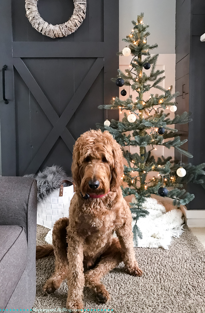 Goldendoodle sitting in front of Small Christmas tree
