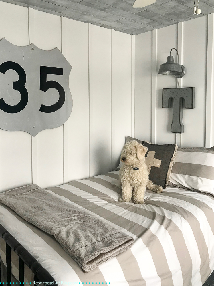 White mini goldendoodle on a gray and white striped bed. Modern farmhouse wall treatments