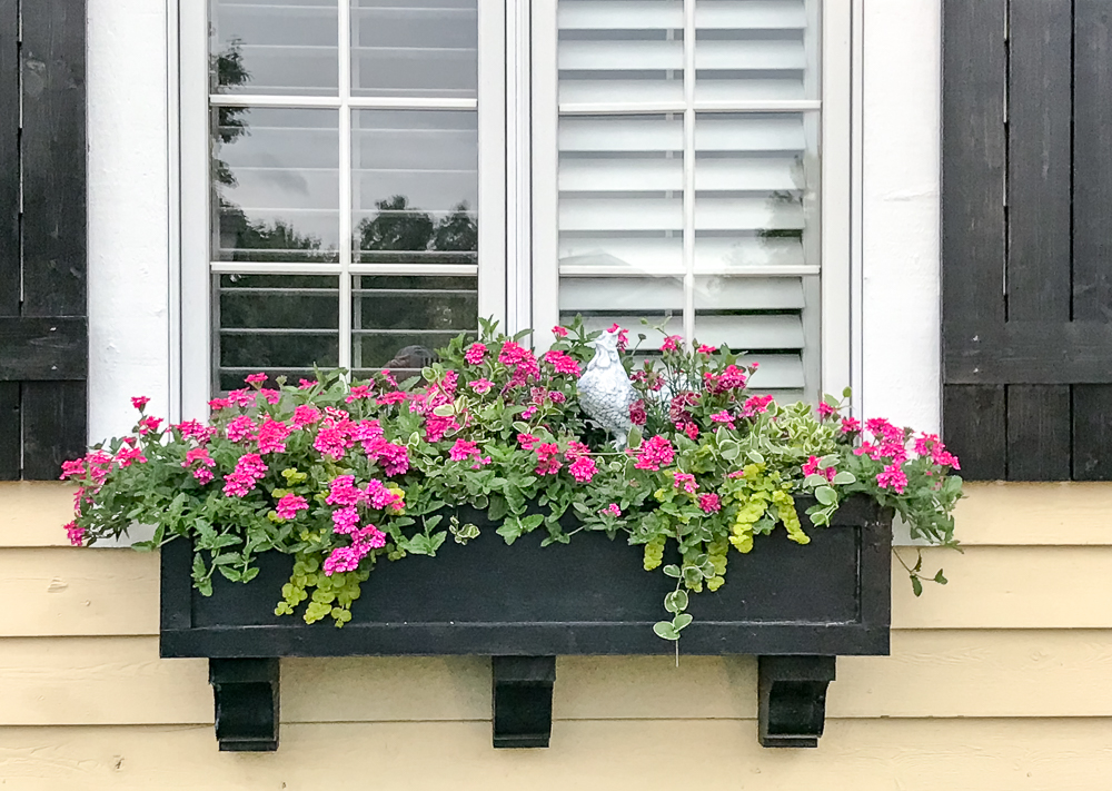 flower box with pink flowers