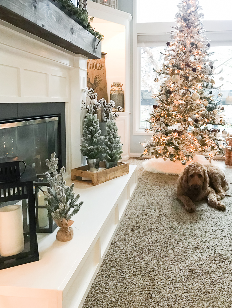 Christmas tree with goldendoodle dog