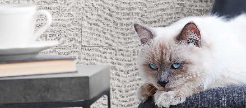 A cat sitting on a chair with tile accent wall in the background