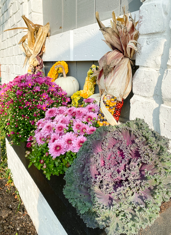flower box with 3 mums and gourds, pumpkins, indian corn, cabbage