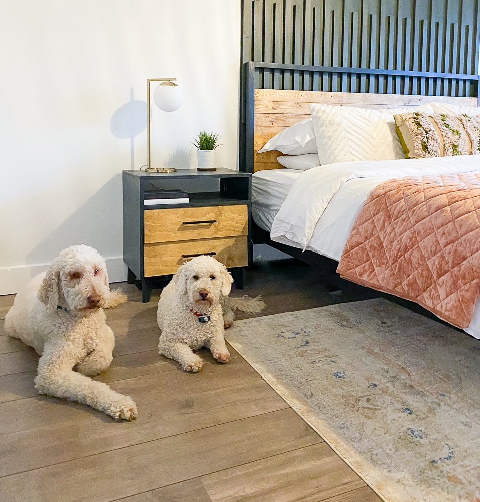 2 pups sitting in front of a nightstand next to a bed