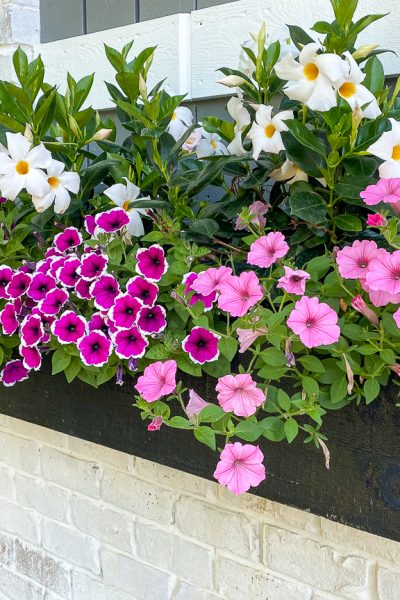 A beautiful wooden flower box full of pink and white flowers